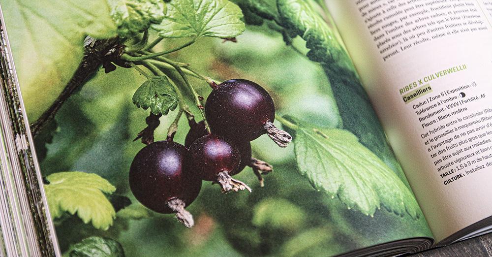caseiller caseilles fruits permaculture