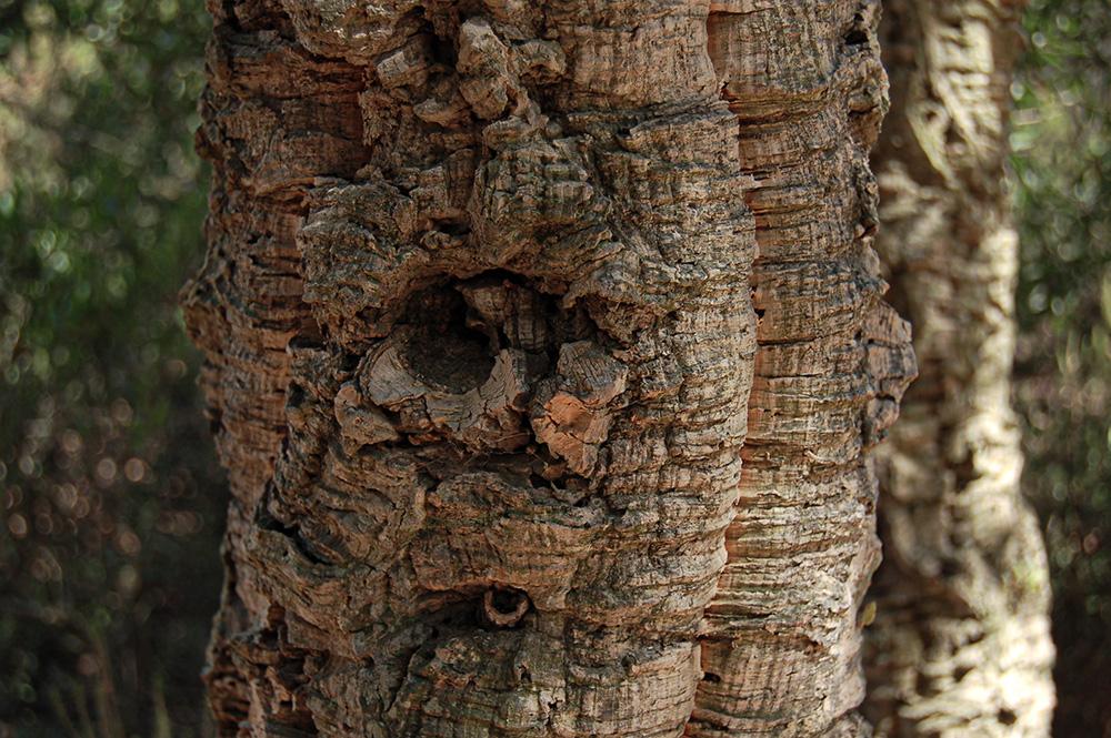 chêne liège arbre matériaux plante