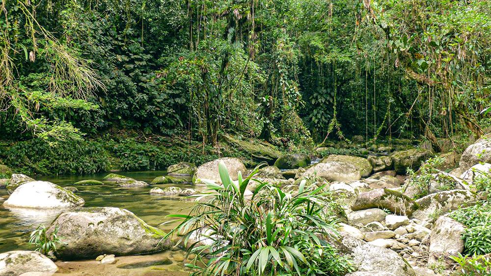 forêt primaire santa marta colombie