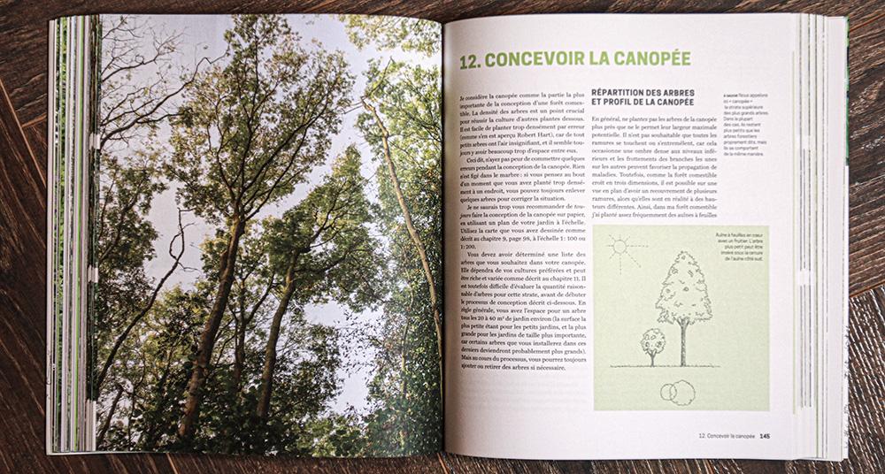 canopée strate supérieure grands arbres