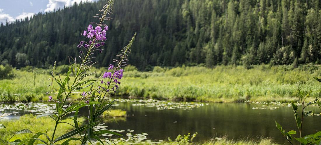 étang eau forêt