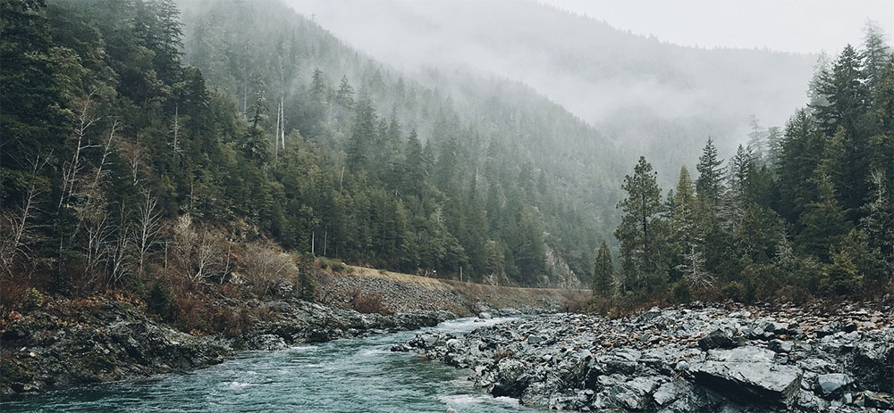 forêt sapins
