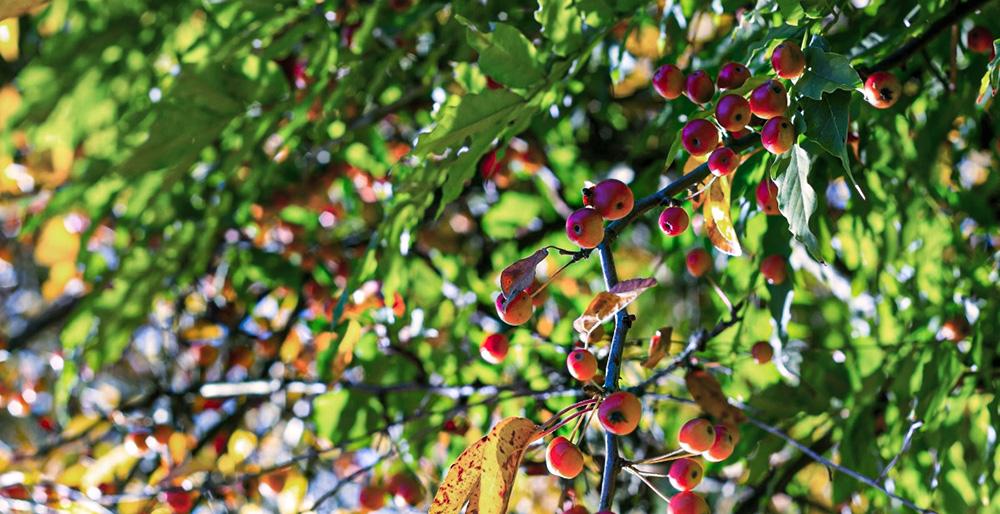 forêt comestible jardin fruits