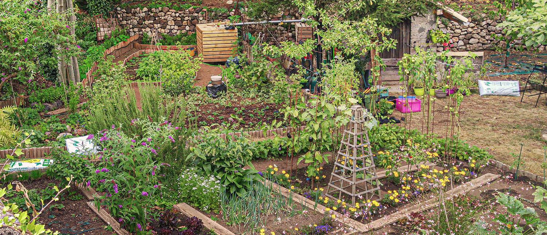 jardin potager légumes