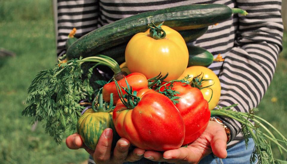 récolte de légumes du jardin