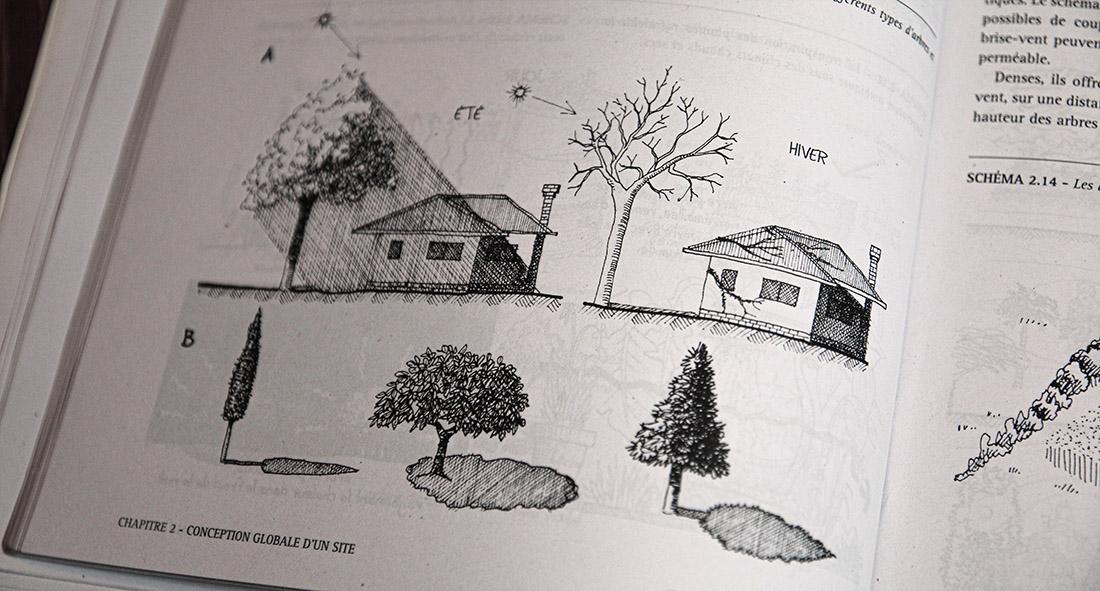 Effet d'un arbre caduque et de son ombre sur la maison selon les saisons.