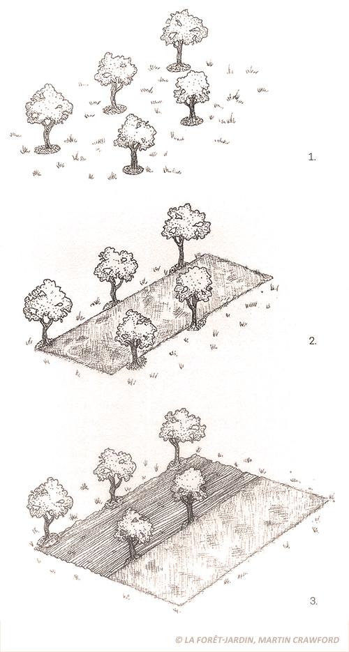 paillage couche plantation arbres permaculture