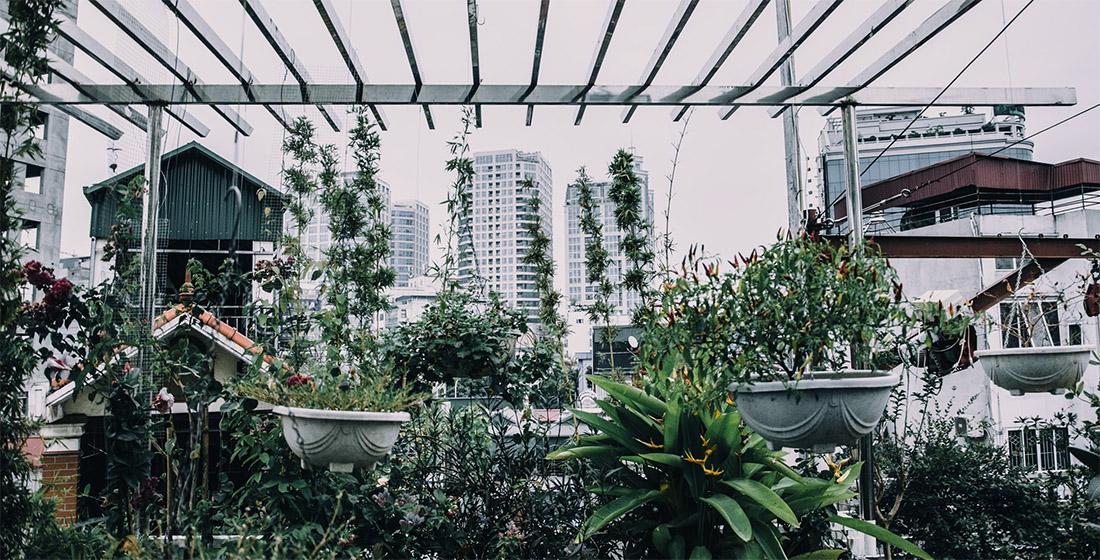 potager urbain devant buildings
