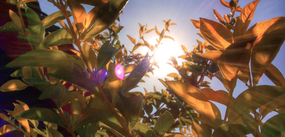 le soleil au jardin