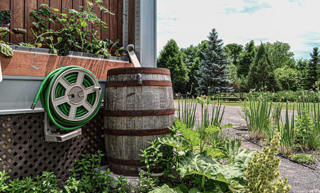 tonneau récupération eau pluie jardin autosuffisance