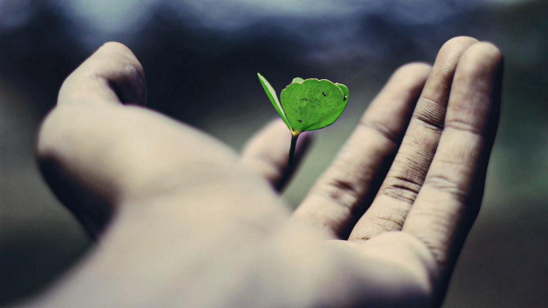 la vie plante
